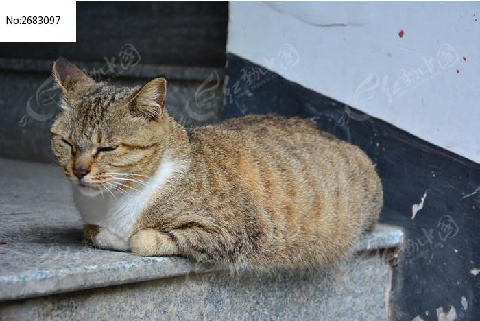 午睡的猫图片,高清大图_陆地动物素材