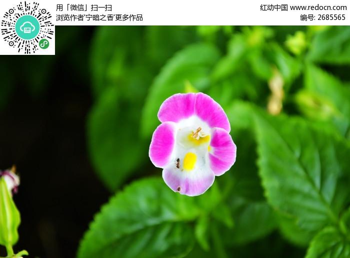 绿叶上的小花图片_动物植物图片
