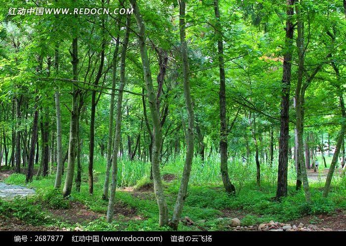 树林里的树木图片