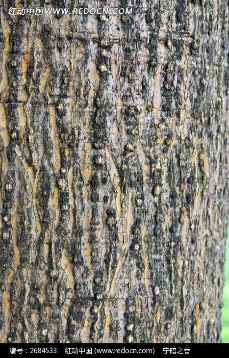 刺桐树皮图片