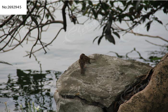 原创摄影图 动物植物 空中动物 湖泊边石头上的两只小鸟  请您分享