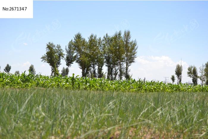 原创摄影图 动物植物 树木枝叶 树木蓝天