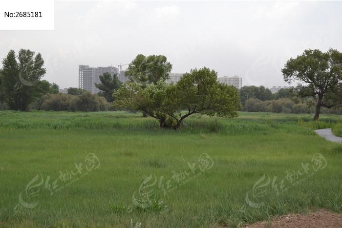 远处分叉的大树图片_动物植物图片