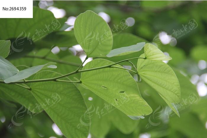 翠绿的叶子图片_动物植物图片