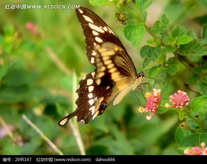 蝴蝶翅膀花纹近照特写图片