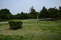 绿色草地美景