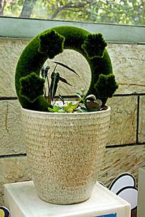 多肉植物盘景装饰