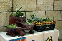 多肉植物种植展览