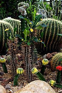 花卉多肉植物