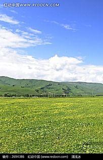 蓝天白云下开满鲜花的草地