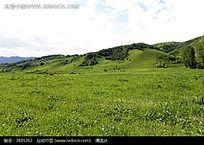 山坡下的绿草地