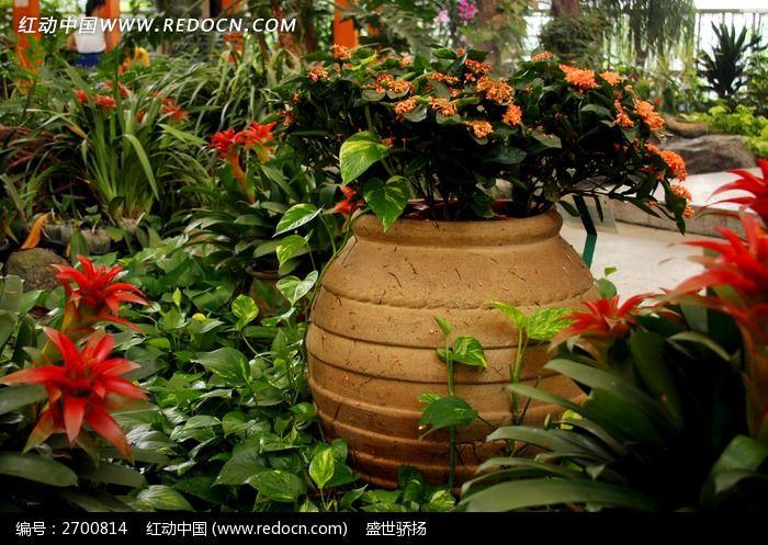 原创摄影图 动物植物 花卉花草 陶瓷花卉
