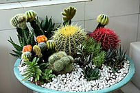 仙人球多肉植物