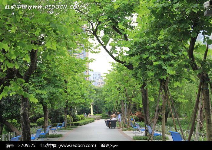 公园小道边翠绿的树木图片_自然风景图片