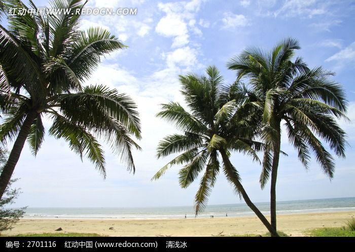 海边沙滩上的椰子树