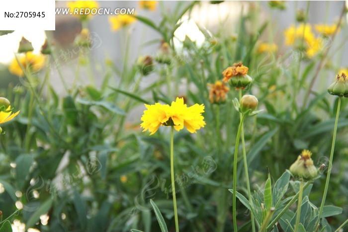 黄色花朵图片_动物植物图片