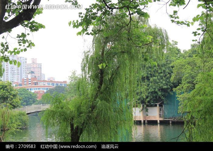 湖泊边的树木图片_图片_红动手机版
