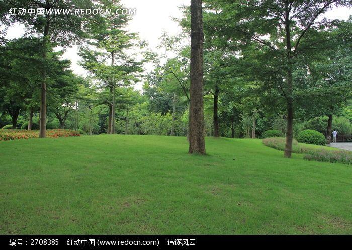 公园草坪上的树木图片_图片_红动手机版