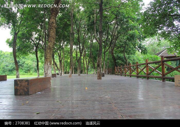 公园木板小道边的树木图片_自然风景图片