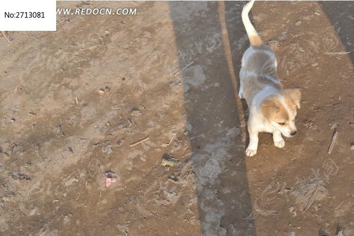 黄白色小狗俯拍图片_动物植物图片