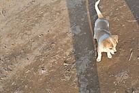 黄白色小狗俯拍