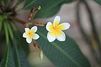 美丽的小黄花