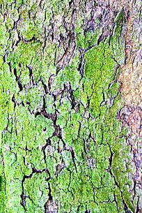 树皮上的青苔贴图