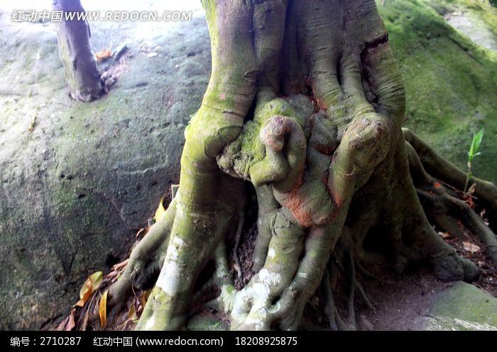 拔地而起的树木图片_图片_红动手机版