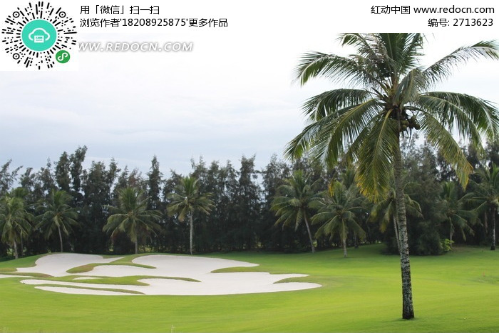 原创摄影图 动物植物 树木枝叶 高尔夫球场的椰子树