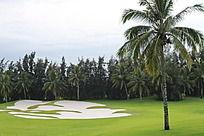 高尔夫球场的椰子树