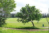 高尔夫球场上的植物