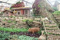 寿光菜博会上的野猪与农家院落造型
