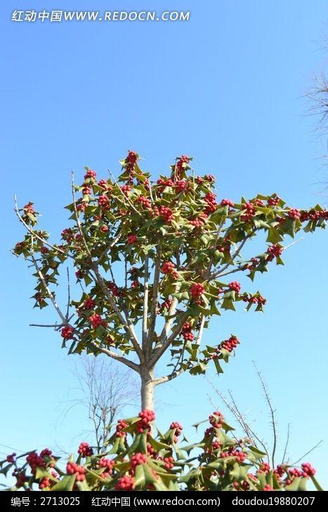阳光下的树木图片