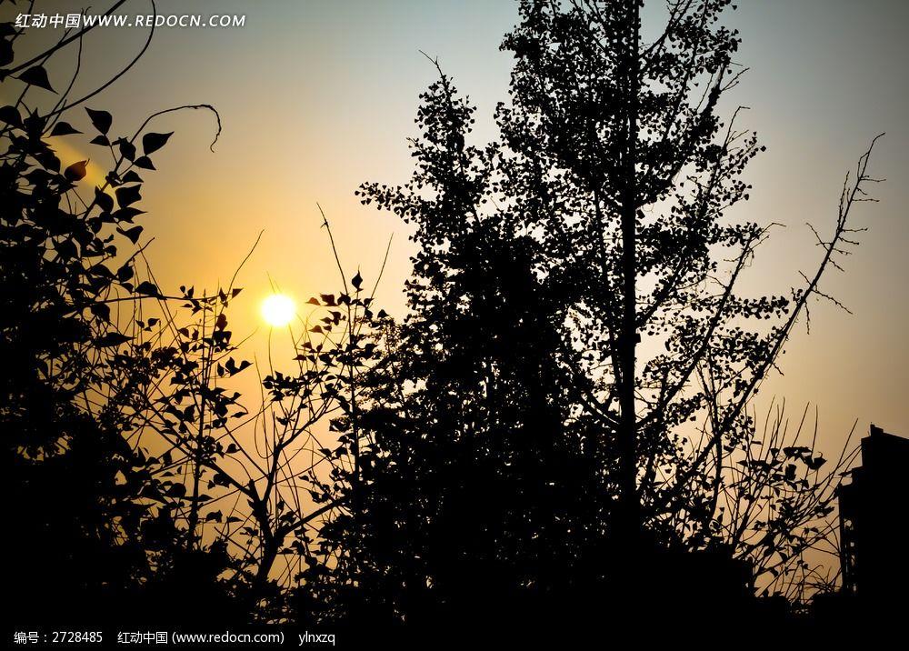 原创摄影图 动物植物 树木枝叶 夕阳下的树枝