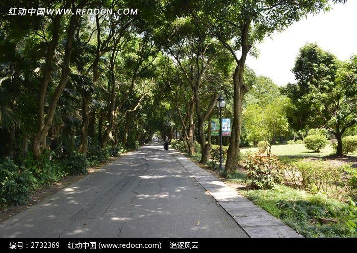 公园道路边的树木图片