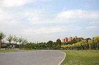 校园里的景色