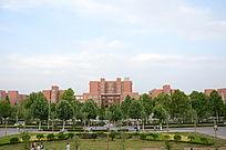 郑大校园风景