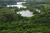 荷花垂柳园