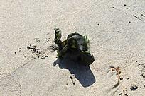 沙滩上的海草