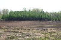 树林边光秃的田地