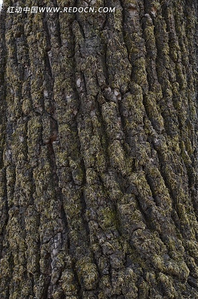 粗状的树干特写