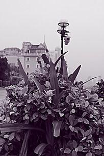 黑白城市广州江边的盆栽植物