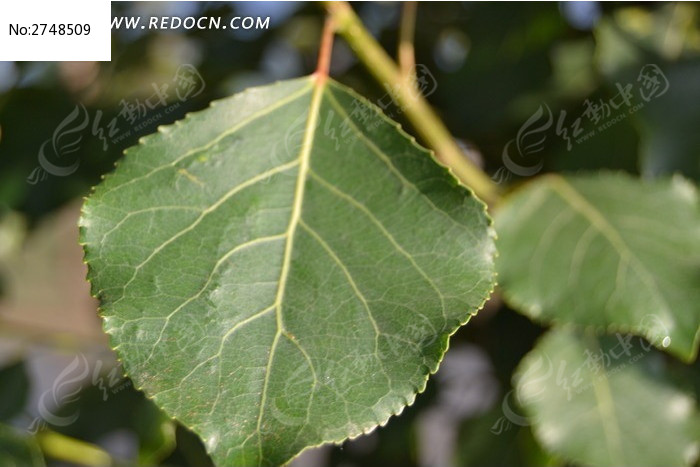 图片主题是树叶,编号是2748509, 文件格式是jpg,您下载的是一个压缩包