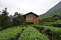茶是故乡浓茶园景点