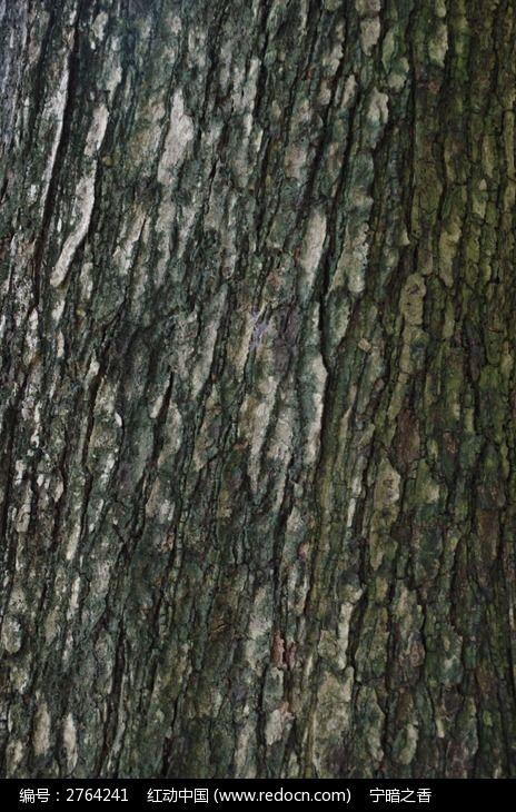 斑驳的树皮纹路图片,高清大图