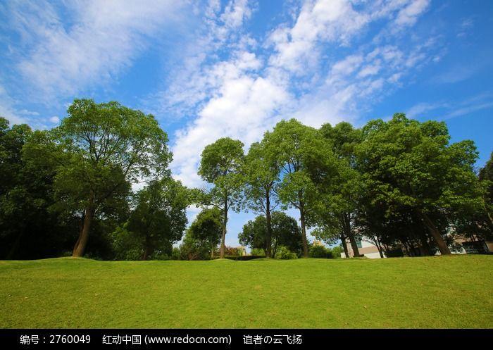 原创摄影图 动物植物 树木枝叶 蓝天绿树草地