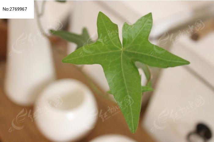 白陶与绿色植物图片_艺术文化图片