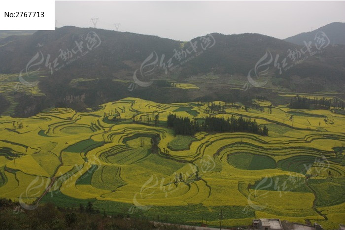 观景台上看油菜花田地图片,高清大图_田野田园素材