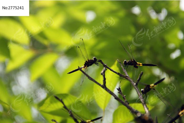 原创摄影图 动物植物 昆虫世界 蜻蜓
