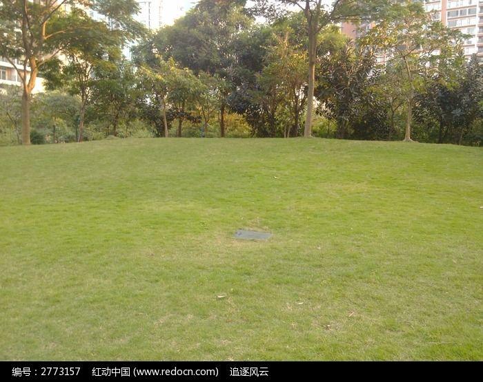 原创摄影图 自然风景 森林树林 翠绿草坪远处的树木